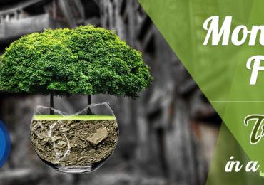 Copac in bol de sticla – Montaj Foto